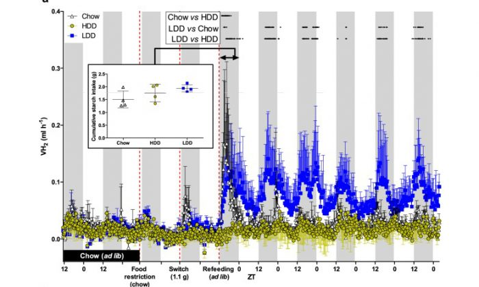 H2 evolution upon first exposure to starches of different digestibility. (a) Standard chow-fed mice within indirect calorimetry were food-restricted leading to fasting (dotted line), which was followed by feeding 1.1g of chow (black), HDD (yellow), or LDD (blue; n=4 per group) prior to the dark phase as a single meal test (2nd dotted line). As a result, they were fasted the next day, and received prior to dark phase ad libitum access to the same diet (3rd dotted line) for an additional 5.5 days. Inset: First 12h cumulative starch-intake of ad libitum feeding with experimental diets.