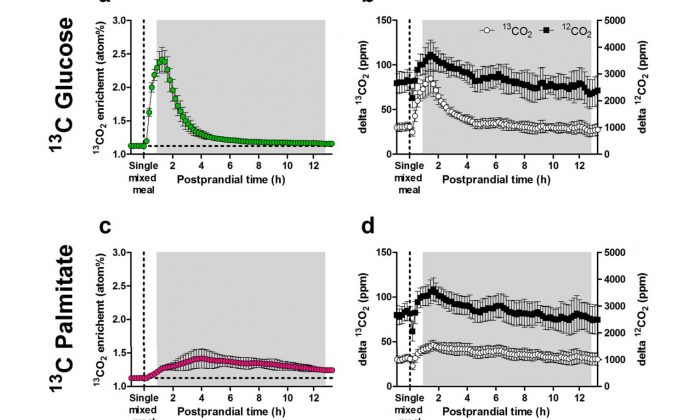 Kinetics of instantaneous 13CO2 enrichment measured by extended InCa after gavage of a single liquid mixed meal containing 13C-labelled tracers, in mice fed a HFD for nine weeks (second mouse study). (a) 13CO2 enrichment after ingestion of the 13C glucose liquid mixed meal followed for 13h (n=23), calculated from 13CO2 and 12CO2 concentrations. (b) 13CO2 (left y-axis) and 12CO2 (right y-axis) concentrations used to calculate 13CO2 enrichments as shown in panel (a), expressed as the difference (delta) from gas concentrations measured in mouse-occupied cages minus gas concentrations in the reference cage (i.e. gas production). (c) 13CO2 enrichment after ingestion of the 13C palmitate liquid mixed meal (n=24). (d) 13CO2 (left y-axis) and 12CO2 (right y-axis) concentrations used to calculate 13CO2 enrichments as shown in panel (c). The horizontal dotted lines indicate baseline 13CO2 enrichment. Shaded areas represent the dark phase. Data is presented as mean±SD. PW, postnatal week.